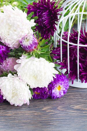 aster flowers: white and violet aster flowers on table Stock Photo
