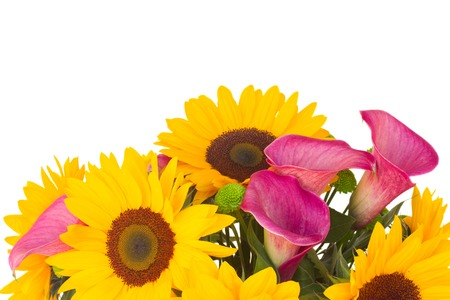 callas: bouquet of   sunflowers and callas  close up isolated on white background