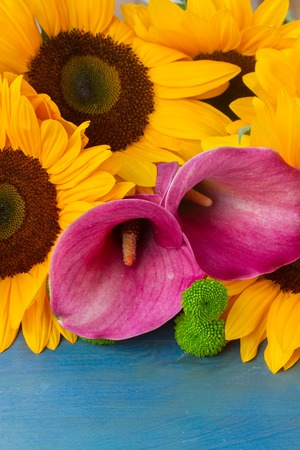 callas: bunch of   sunflowers callas and mums ob blue background Stock Photo