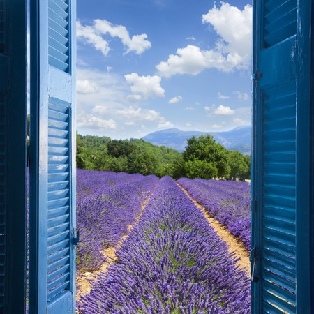 Lavender field with summer blue sky through wooden shutters, France Stockfoto