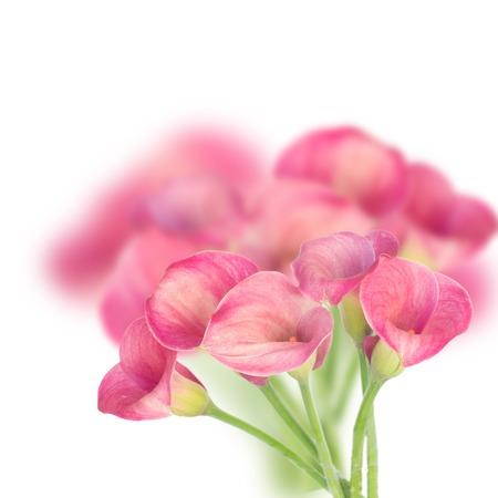 calas blancas: Ramo de flores de cala frescas en blanco
