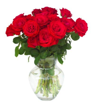Stelletje scharlaken rode verse rozen in de vaas op wit wordt geïsoleerd