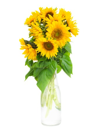 mazzo di fiori: mazzo di girasoli luminosi in bottiglia isolato su whute