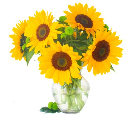 a sunflower: bunch of   fresh bright sunflowers in glass vase isolated on white background