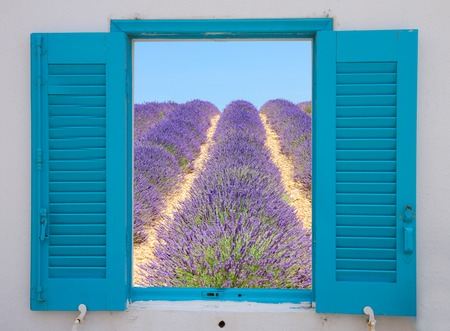 flowers field: provence window with view of  lavender flowers field, France