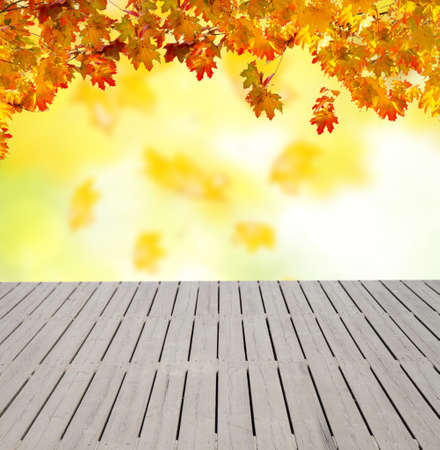 garden lawn: wooden planks and fall yellow leaves on  bokeh background with sun beams Stock Photo