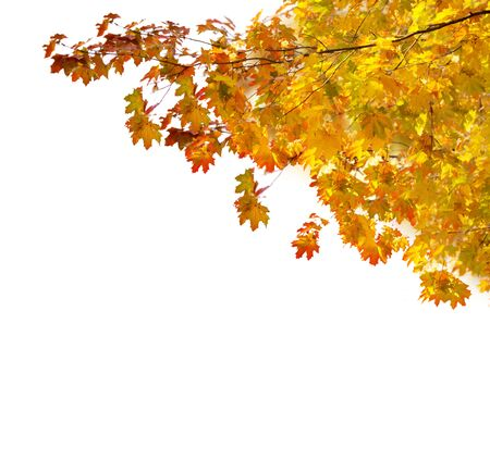 garden lawn: fall yellow and orange leaves on white background