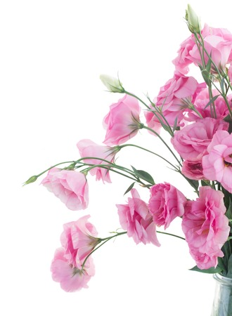 close ups: bunch of pink eustoma flowers close ups  isolated on white background