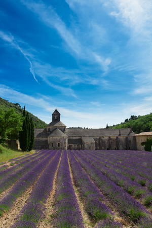 lavande: Abbey Senanque and blooming  Lavender field at summer day, France