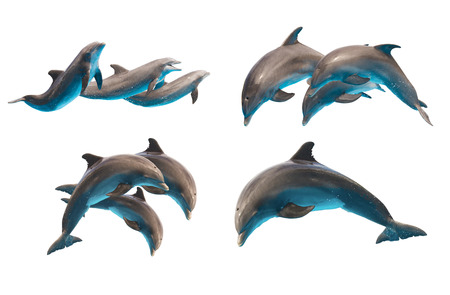 set of jumping bottlenose dolphins isolated on white background