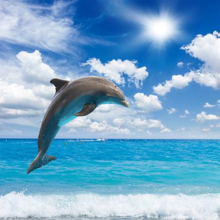 saltando: delfines saltando, paisaje marino soleado, con aguas profundas del océano