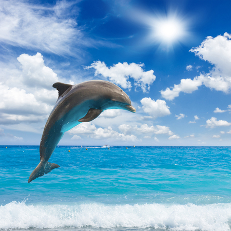 dolphins: jumping dolphins, sunny  seascape with deep  ocean  waters Stock Photo