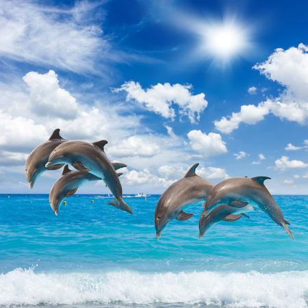ジャンプのイルカは、ターコイズ ブルーの海の水と cloudscape シースケープ