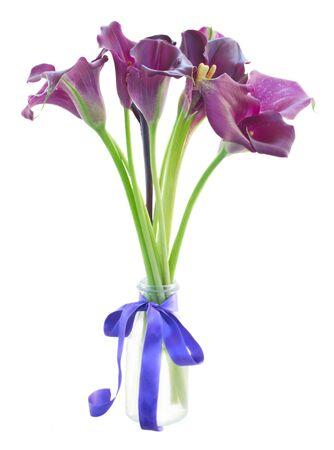 calas blancas: manojo de flores de color violeta Lilly de la cala en florero aislado en el fondo blanco