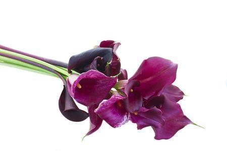 flor de lis: manojo de flores violetas Calla lilly aislado en fondo blanco
