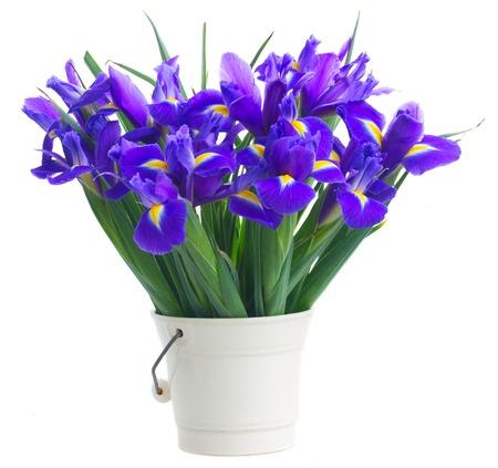 iris: pot of  irises isolated on white background Stock Photo