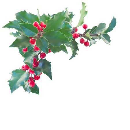 Holly branch border with  leaves and berries isolated on white background 免版税图像