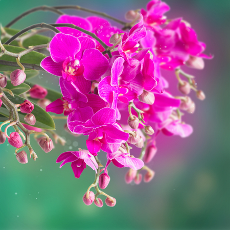 orchid branch: purple  orchid branch on green bokeh background