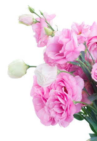 close ups: bunch of pink and white eustoma flowers close ups  isolated on white background