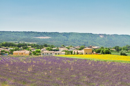 lavandula angustifolia: Rural landscape with  lavender and sunflowers  field, Provence, France