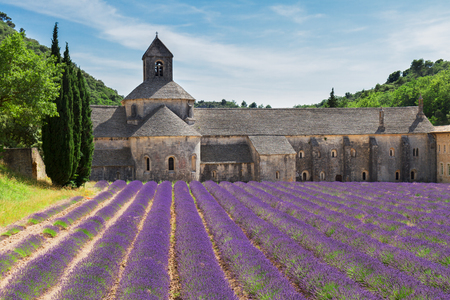 senanque: world famous Abbey Senanque and blooming  Lavender field, France