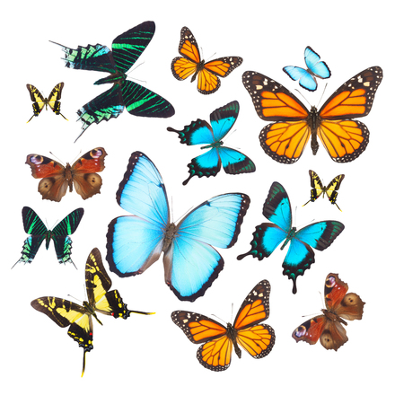 clod: Clod of colorful tropical butterflies on white background