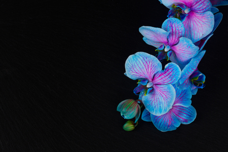 Bunch of fresh blue  orchids  on  black background with copy space