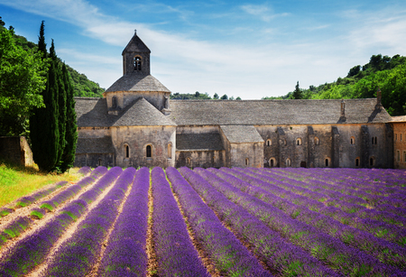 senanque: world famous Abbey Senanque and blooming  Lavender field, France, toned