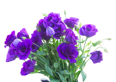Bündel von frischen Veilchen eustoma Blumen auf weiß isoliert