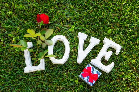 grass flower: Love sign with gift box and one red rose on green grass