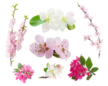 jardines con flores: Conjunto de ramas de árboles de flores frescas con las flores florecientes del resorte aisladas en el fondo blanco