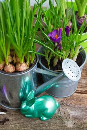 flowerpots: Easter in garden - green rabbit with flowerpots