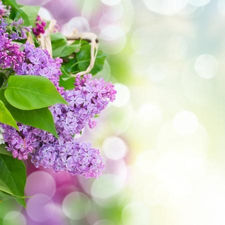 春の庭で葉の緑とライラックの花の束
