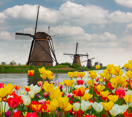 dutch: dutch windmill over canal and tulips field , Holland Stock Photo