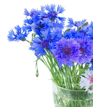 posy: Posy  of blue cornflowers in glass vase close up  isolated on white background