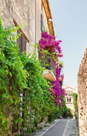 summer trees: beautiful old town street with leaves and flowers of Provence at summer day, France