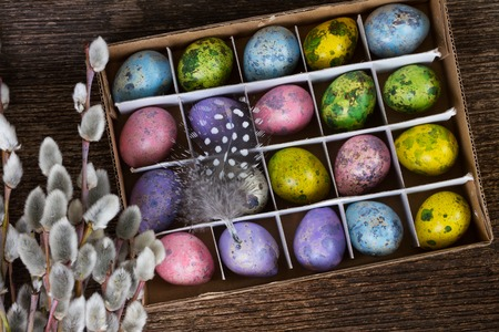 Colored quail eggs with feather and catkins on wood
