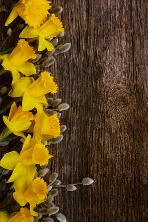 catkins: spring fresh  yellow daffodils with catkins border on wooden background Stock Photo