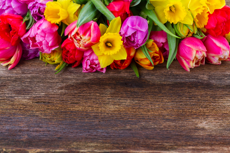 fresh pink, purple and red  tulips and daffodils border  on wooden background