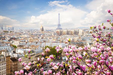 skyline van Parijs daken met Eiffeltoren met bloeiende magnolia lente boom, Frankrijk