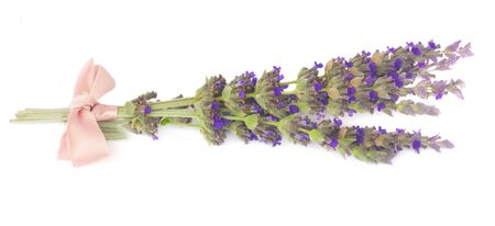 posy: Lavender  fresh flowers posy with pink bow  isolated on white background Stock Photo