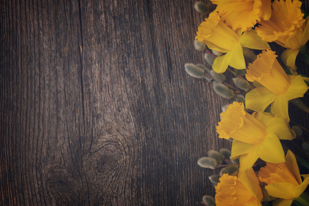 catkins: spring fresh  yellow daffodils with catkins border on wooden background, retro toned