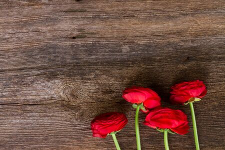 posy: posy of red ranunculus flowers on wooden nackground Stock Photo