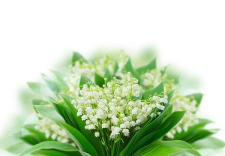 Manojo de Lilly del valle florece sobre el fondo blanco