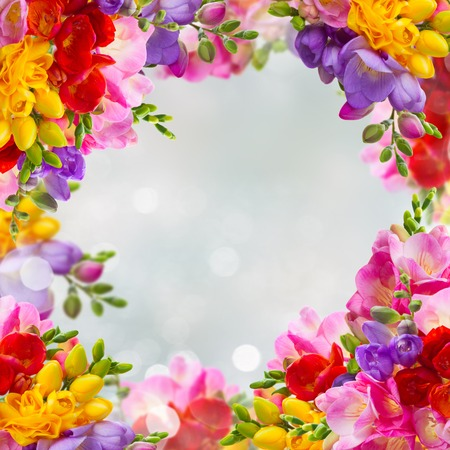 Fresh yellow, red, pink and blue freesia flowers frame over blue background