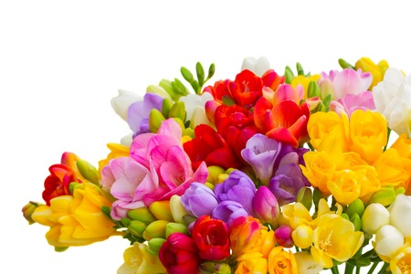 posy: Fresh freesia flowers posy close up isolated on white background