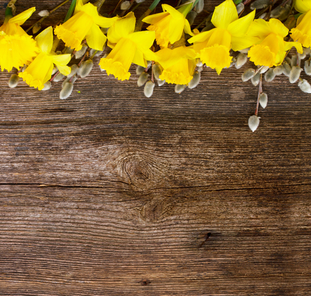 catkins: spring fresh  yellow daffodil flowers with catkins border on wooden background with copy space