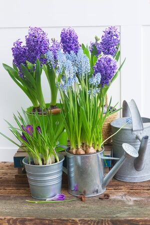 growing flowers: Gardening tools and fresh growing  flowers in pots Stock Photo