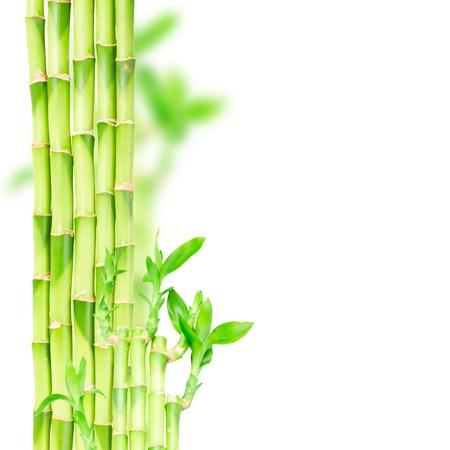 japones bambu: bambú verde tallos y aleros frontera aislado en el fondo blanco Foto de archivo