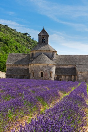 senanque: Abbey Senanque and rows of Lavender field, France